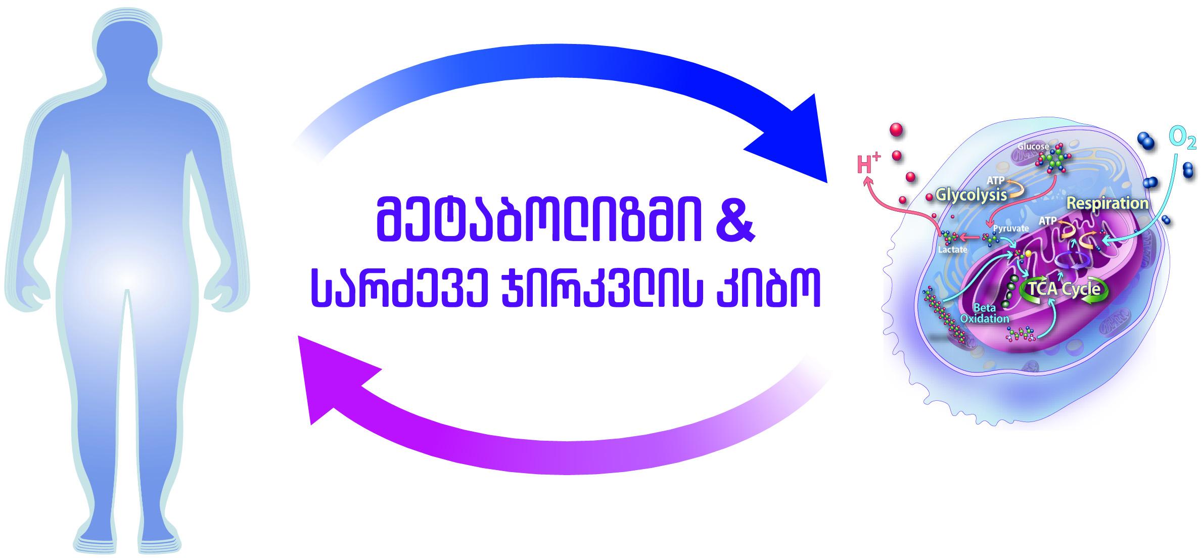 მეტაბოლიზმი